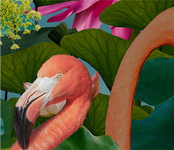 Deatils-from-Flamingos