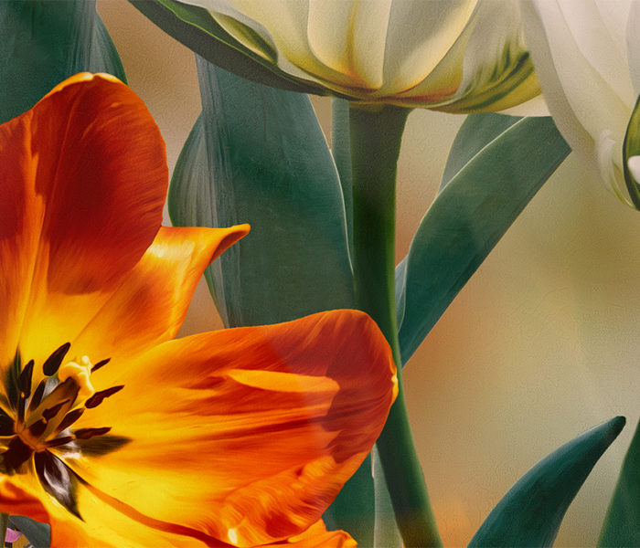 Detail of tulips
